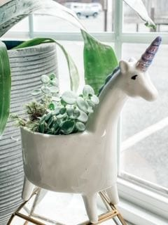 Lolly Unicorn Planter (plants may vary)